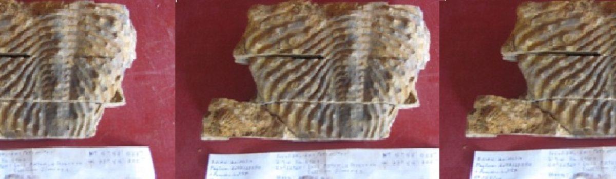 Fósiles de Tobasia y Floresta