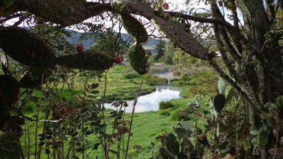 Pozo Verde Aguas Termales (4)
