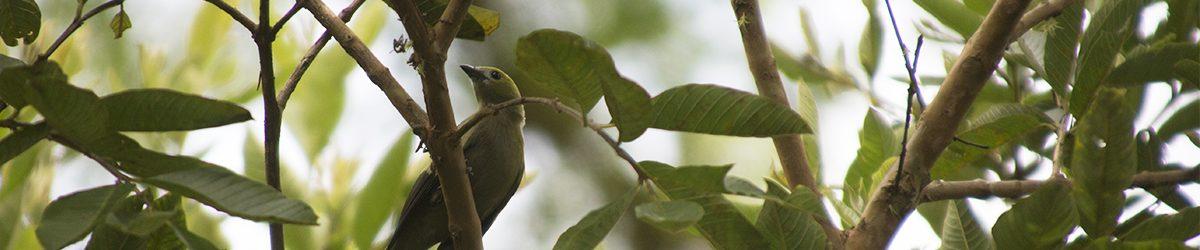 Cultura y Turismo realizará 'Taller de Avistamiento de Aves, Calidad y Reconocimiento'